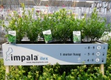 impalaplants.com